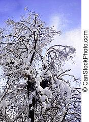 trees snow