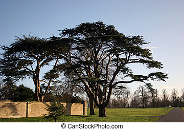 trees - large trees in country park against blue sky in...