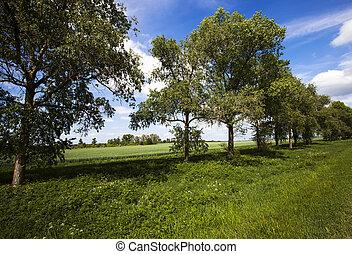 trees (summer)
