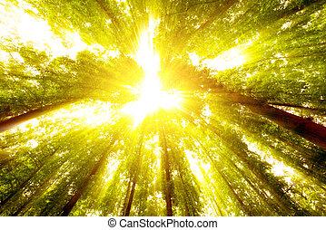 Tall trees, bright sun.