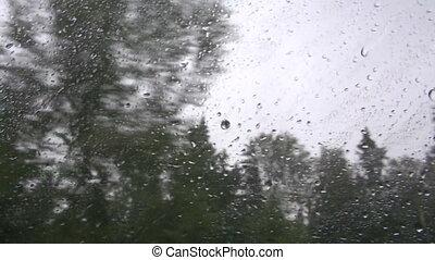 Trees through car window