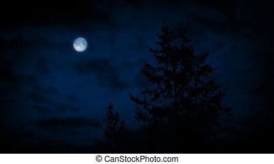 Trees Under Moon On Windy Night