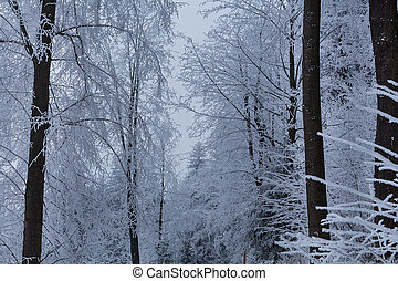 Trees under snow at the winter time