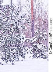 trees under snow in winter