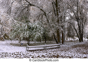 Trees under the snow in the park