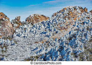 Trees under the snow on the cliffs.