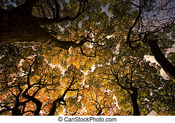 Trees View in Autumn