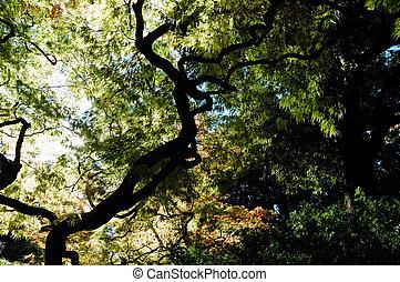 trees view upwards, fall season