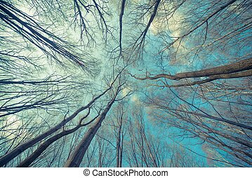 Trees Web Background. Forest Concept Backdrop.