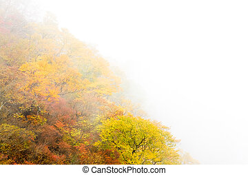 Trees were autumn leaves in the fog