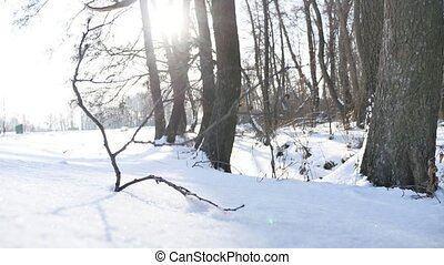 trees winter dry forest snow twig sunlight, landscape nature...