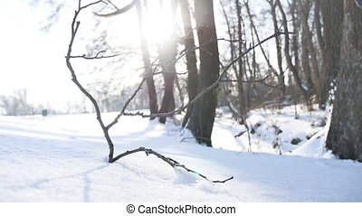 trees winter dry twig sunlight forest snow, landscape nature...