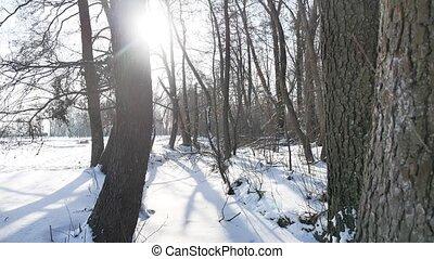 trees winter forest nature snow, landscape frozen river