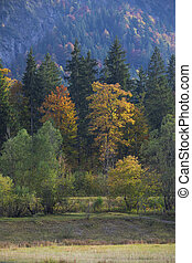 Trees with autumn leaves at Weitsee, Bavaria Germany