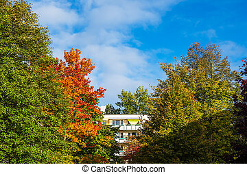 Trees with autumnal colors in the city Rostock, Germany.