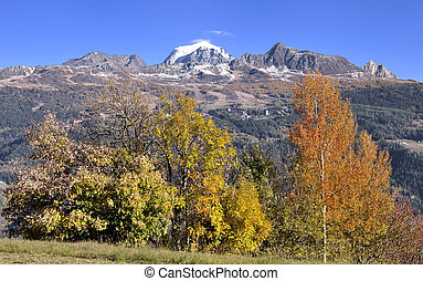 trees with beautiful autumnal colors in front of rocky mountain and snowy peak