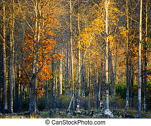 Trees with colorful leaves in autumn