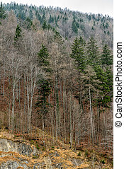 Trees with fallen leaves in mountain forest