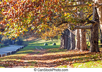 trees with fallen leaves