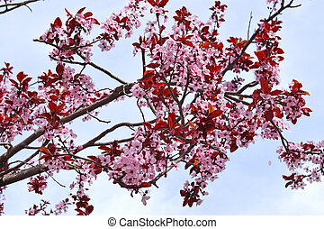 Trees with flowers in spring