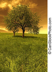 Trees with green field at sunset