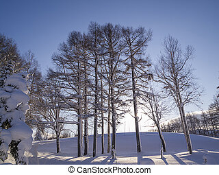 Trees with hoarfrost in winter.