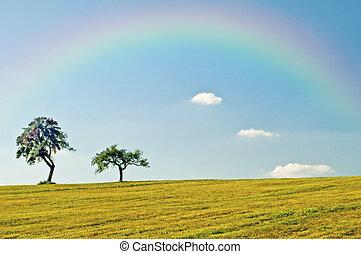 Trees with rainbow