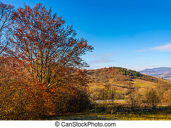 trees with red foliage in autumnal countryside. beautiful...