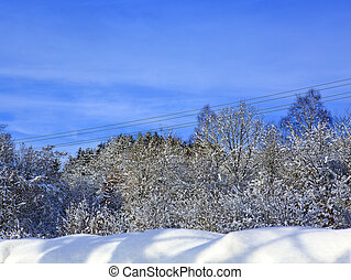 Trees with snow and blue sky.