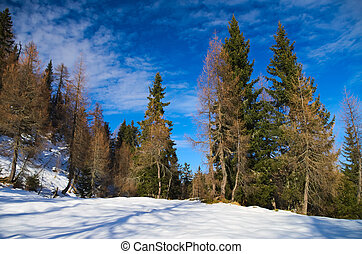 Trees with snow in a sunny day