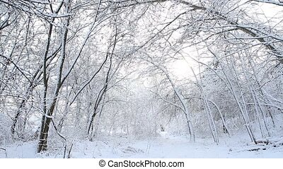 Trees with snow in winter forest
