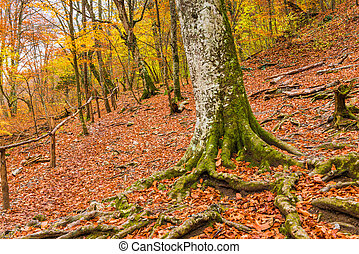 trees with strong roots on a mountainside, autumn landscape