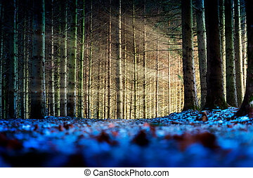 Trees with sunbeams in a forest
