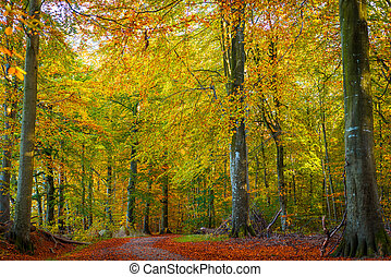 Trees with warm colors in the fall
