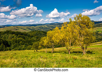 trees with yellow foliage on grassy slope. beautiful...