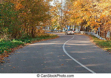 trees with yellowed leaves on the roadside, winding road in the autumn forest