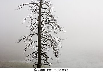 Yellowstone - Trees without leaves between fog, Yellowstone ...
