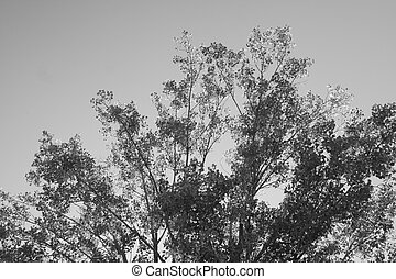 Treetop in Black and White