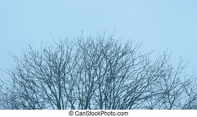 Treetop In The Evening - Tree top sways in breeze at dusk