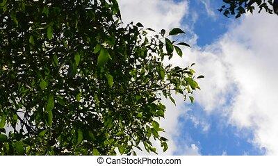 Treetop in wind