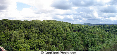 Landscape image of Treetops under a cloudy sky