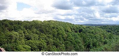 Treetop Landscape - Landscape image of Treetops under a...