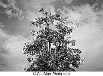 Treetop on sky background , black and white color style