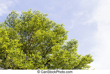 treetop - Treetop on blue sky background