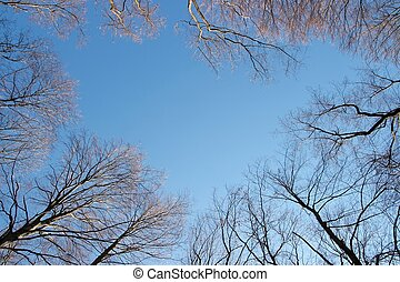 Bare treetops in winter against blue sky