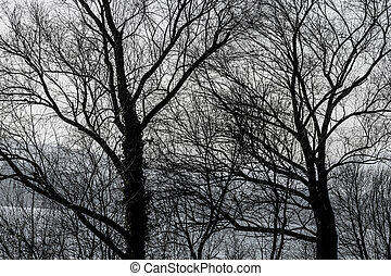 treetops in autumn, symbolizing growth, nature, network,...