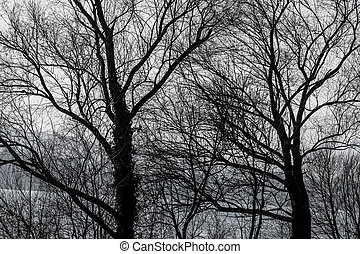 treetops in autumn, symbol of growth, nature, network,...