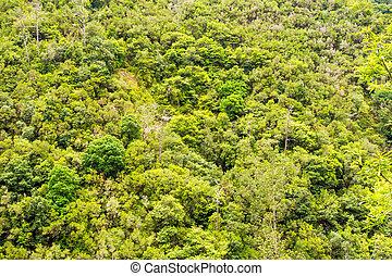 treetops, in, tropisch bos, /, jungle