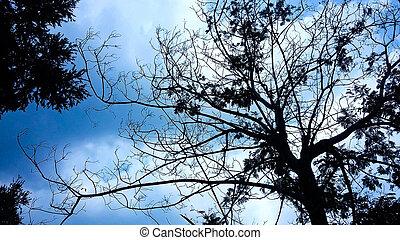 Treetops Silhouette