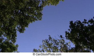 Treetops spin, rotation